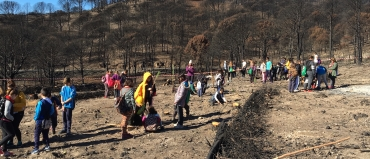 Repoblación forestal voluntaria